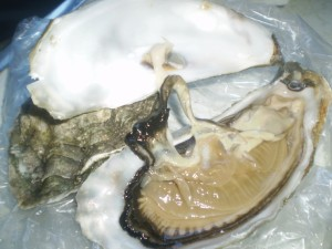 open-oyster
