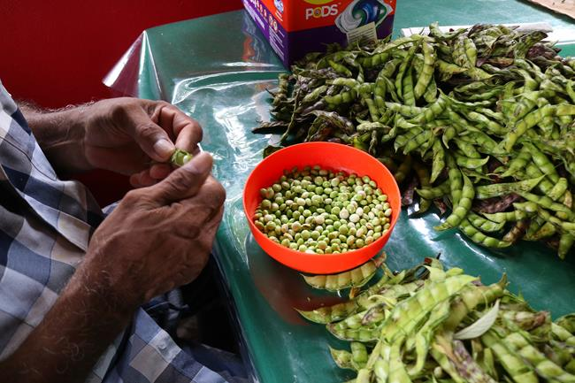 curry pigeon peas recipe (1)